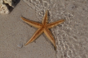 Sun, Sea, Sand and Starfish
